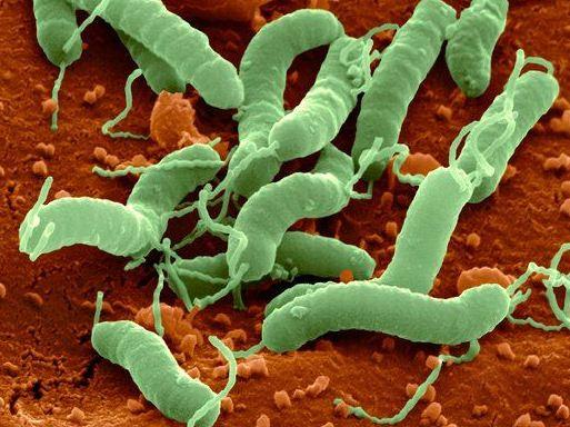 Helicobacter-Pylori-in-actiune